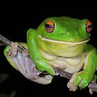 Sending You a Smile - White-Lipped Tree Frog by naturalnomad