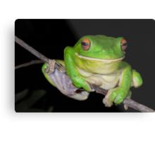 Sending You a Smile - White-Lipped Tree Frog Metal Print