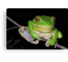 Sending You a Smile - White-Lipped Tree Frog Canvas Print