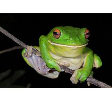 Sending You a Smile - White-Lipped Tree Frog Photographic Print