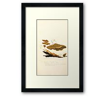 Coloured figures of English fungi or mushrooms James Sowerby 1809 0499 Framed Print