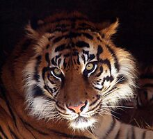 Big Cat by johnny5