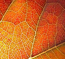 Autumn Leaf by Etwin