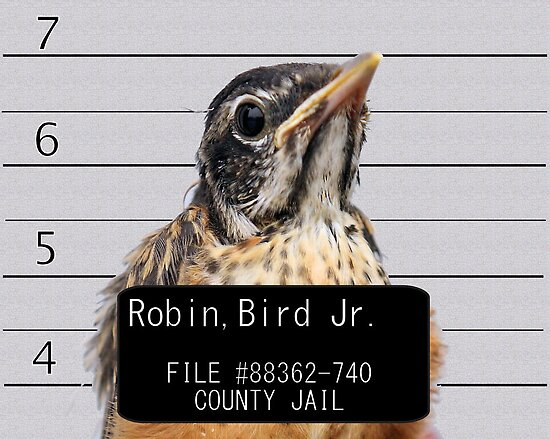 Jail Bird by Brian Dodd