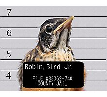 Jail Bird Photographic Print