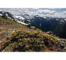 Mountain Bouquet - Olympic N. P. Photographic Print