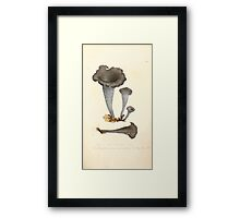 Coloured figures of English fungi or mushrooms James Sowerby 1809 0207 Framed Print