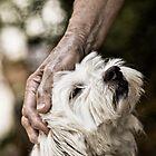 Puppy face by Milos Markovic