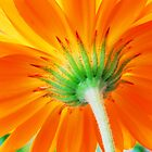 Orange Perfection  by Jennifer Hulbert-Hortman