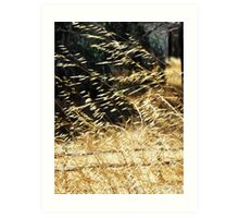 Golden grass blowing in the wind Art Print