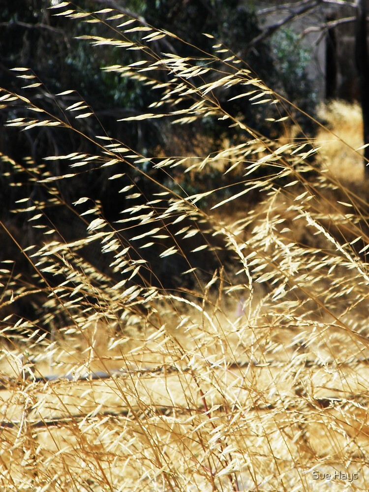 Golden grass blowing in the wind by Sue Hays