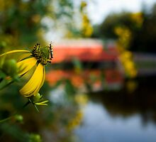 Bug's Eye View of Sach's Covered Bridge by Mark Van Scyoc