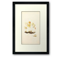 Coloured figures of English fungi or mushrooms James Sowerby 1809 0129 Framed Print
