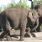 Elephant Two Step by louisegreen