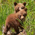 Black Bear Cubs by naturalnomad