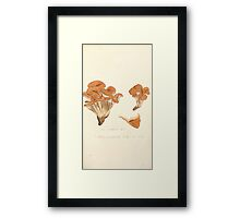 Coloured figures of English fungi or mushrooms James Sowerby 1809 0445 Framed Print