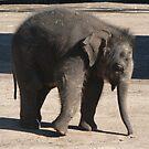 Baby Elephant Dance by louisegreen