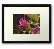 Cacti Flower Closeup #1 Framed Print