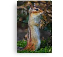 Standing Tall - Eastern Chipmunk Canvas Print