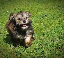 Wee!  I Can Run So Fast! by JaninesWorld