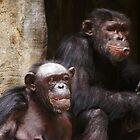 Monkeys on mountains by loiteke