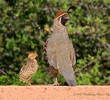 Gambel's Quail (Male) & Chick by Kimberly Chadwick