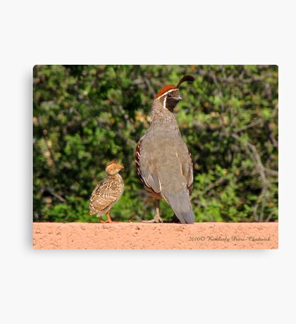 Gambel's Quail (Male) & Chick Canvas Print