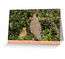 Gambel's Quail (Male) & Chick Greeting Card