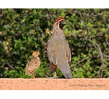 Gambel's Quail (Male) & Chick Photographic Print
