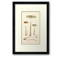Coloured figures of English fungi or mushrooms James Sowerby 1809 0155 Framed Print