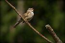 SINGING SONGBIRD by Sandy Stewart