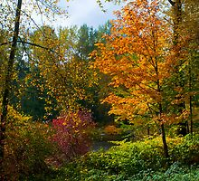 Autumn Colors by RavenFalls