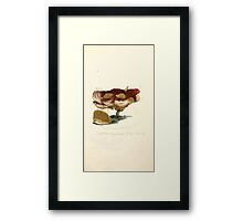 Coloured figures of English fungi or mushrooms James Sowerby 1809 0495 Framed Print