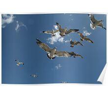 Flocking High Poster