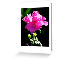 Vibrant pink flower in the Summer Greeting Card