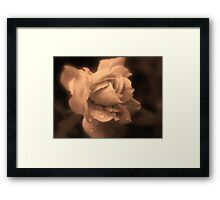 Monochrone Rose Framed Print