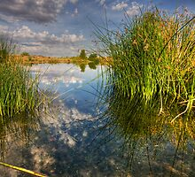 Among the Reeds by Sue  Cullumber