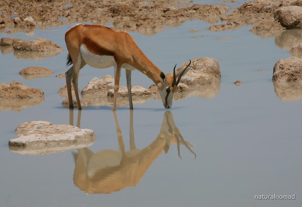 Springbok Reflection by naturalnomad
