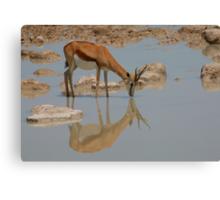 Springbok Reflection Canvas Print