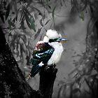 Kookaburra's Gum Tree by TmacScapes