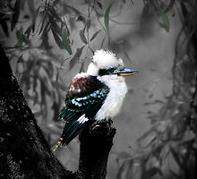 Kookaburra's Gum Tree by TmacScapes