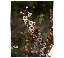 Flowers Like Jam Tarts Poster