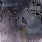 This Lonely Bird by Judi Taylor