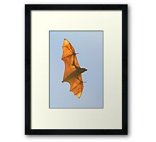 X-ray Fruit Bat Framed Print