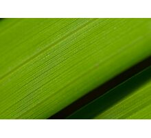 Shadows - The shadows of a palm leaf Photographic Print