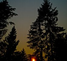 Another Sun Through Some Trees by Andrew Lapierre