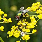 Fly and Fennel  by John Thurgood