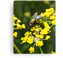 Fly and Fennel  Canvas Print