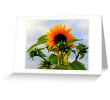 """My Love Is Waiting featured in """"I got the Music in me"""" Greeting Card"""
