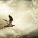 Written on the sky by Nicola Smith